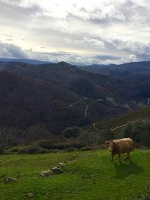 Canón do Bibei dende o expriorado de San Vicenzo