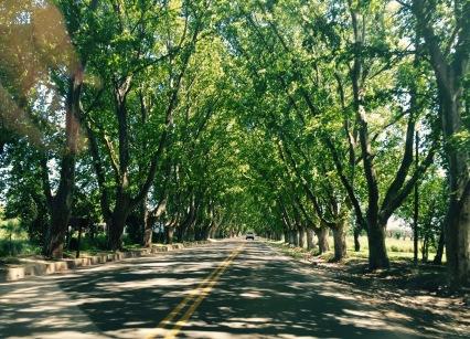 Pola estrada cara á Colonia Caroya